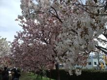 +++ りり☆Blog evolution +++ 広島在住OLの何かやらかしてる日記-20110417_039.jpg