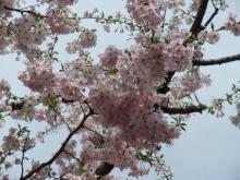 +++ りり☆Blog evolution +++ 広島在住OLの何かやらかしてる日記-20110417_051.jpg