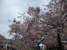 +++ りり☆Blog evolution +++ 広島在住OLの何かやらかしてる日記-20110417_053.jpg