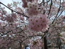 +++ りり☆Blog evolution +++ 広島在住OLの何かやらかしてる日記-20110417_054.jpg