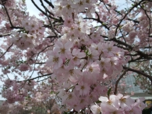 +++ りり☆Blog evolution +++ 広島在住OLの何かやらかしてる日記-20110417_055.jpg
