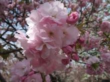 +++ りり☆Blog evolution +++ 広島在住OLの何かやらかしてる日記-20110417_074.jpg