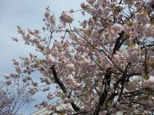 +++ りり☆Blog evolution +++ 広島在住OLの何かやらかしてる日記-20110417_078.jpg