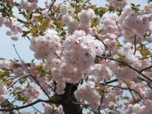 +++ りり☆Blog evolution +++ 広島在住OLの何かやらかしてる日記-20110417_080.jpg