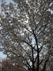 +++ りり☆Blog evolution +++ 広島在住OLの何かやらかしてる日記-20110417_088.jpg