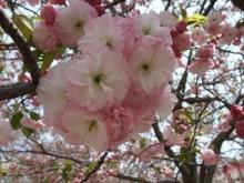 +++ りり☆Blog evolution +++ 広島在住OLの何かやらかしてる日記-20110417_084.jpg