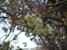 +++ りり☆Blog evolution +++ 広島在住OLの何かやらかしてる日記-20110417_097.jpg