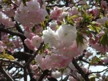 +++ りり☆Blog evolution +++ 広島在住OLの何かやらかしてる日記-20110417_109.jpg