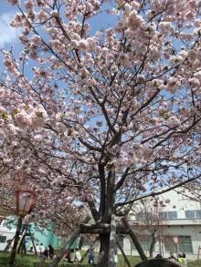 +++ りり☆Blog evolution +++ 広島在住OLの何かやらかしてる日記-20110417_117.jpg