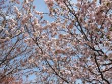 +++ りり☆Blog evolution +++ 広島在住OLの何かやらかしてる日記-20110417_118.jpg