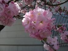 +++ りり☆Blog evolution +++ 広島在住OLの何かやらかしてる日記-20110417_131.jpg