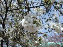 +++ りり☆Blog evolution +++ 広島在住OLの何かやらかしてる日記-20110417_134.jpg