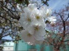 +++ りり☆Blog evolution +++ 広島在住OLの何かやらかしてる日記-20110417_135.jpg