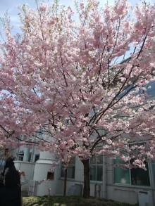 +++ りり☆Blog evolution +++ 広島在住OLの何かやらかしてる日記-20110417_137.jpg