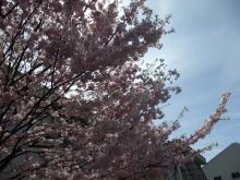 +++ りり☆Blog evolution +++ 広島在住OLの何かやらかしてる日記-20110417_140.jpg