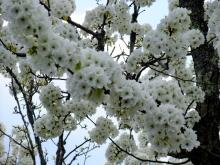 +++ りり☆Blog evolution +++ 広島在住OLの何かやらかしてる日記-20110424_155.jpg