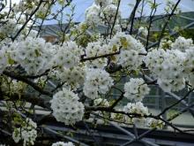 +++ りり☆Blog evolution +++ 広島在住OLの何かやらかしてる日記-20110424_156.jpg