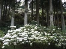 +++ りり☆Blog evolution +++ 広島在住OLの何かやらかしてる日記-20110504_052.jpg