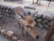 +++ りり☆Blog evolution +++ 広島在住OLの何かやらかしてる日記-20111120_025.jpg