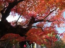 +++ りり☆Blog evolution +++ 広島在住OLの何かやらかしてる日記-20111120_181.jpg