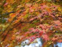 +++ りり☆Blog evolution +++ 広島在住OLの何かやらかしてる日記-20111120_234.jpg