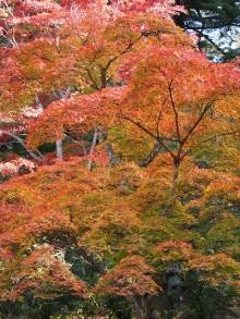 +++ りり☆Blog evolution +++ 広島在住OLの何かやらかしてる日記-20111120_237.jpg