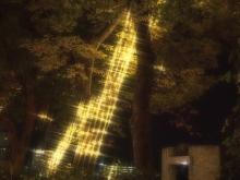 +++ りり☆Blog evolution +++ 広島在住OLの何かやらかしてる日記-20111120_259.jpg