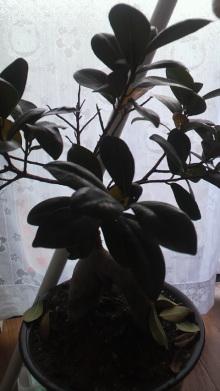 +++ りり☆Blog evolution +++ 広島在住OLの何かやらかしてる日記-2011122813410002.jpg