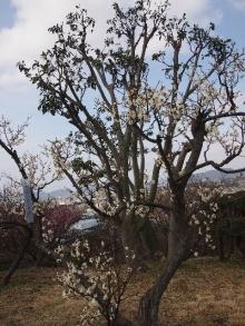 +++ りり☆Blog evolution +++ 広島在住OLの何かやらかしてる日記-20120303_039.jpg