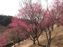 +++ りり☆Blog evolution +++ 広島在住OLの何かやらかしてる日記-20120303_088.jpg
