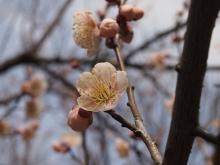 +++ りり☆Blog evolution +++ 広島在住OLの何かやらかしてる日記-20120303_120.jpg