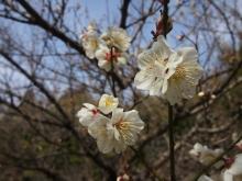 +++ りり☆Blog evolution +++ 広島在住OLの何かやらかしてる日記-20120303_146.jpg