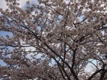 +++ りり☆Blog evolution +++ 広島在住OLの何かやらかしてる日記-20120407_001.jpg