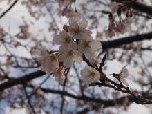 +++ りり☆Blog evolution +++ 広島在住OLの何かやらかしてる日記-20120407_007.jpg