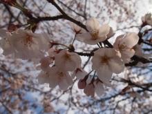 +++ りり☆Blog evolution +++ 広島在住OLの何かやらかしてる日記-20120407_008.jpg
