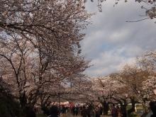 +++ りり☆Blog evolution +++ 広島在住OLの何かやらかしてる日記-20120407_014.jpg