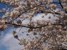 +++ りり☆Blog evolution +++ 広島在住OLの何かやらかしてる日記-20120407_025.jpg