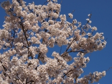 +++ りり☆Blog evolution +++ 広島在住OLの何かやらかしてる日記-20120407_035.jpg