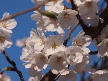 +++ りり☆Blog evolution +++ 広島在住OLの何かやらかしてる日記-20120407_036.jpg