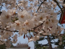 +++ りり☆Blog evolution +++ 広島在住OLの何かやらかしてる日記-20120408_040.jpg