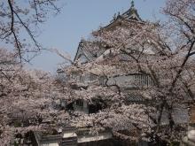 +++ りり☆Blog evolution +++ 広島在住OLの何かやらかしてる日記-20120408_058.jpg