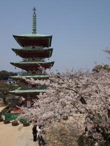 +++ りり☆Blog evolution +++ 広島在住OLの何かやらかしてる日記-20120408_066.jpg
