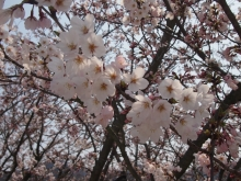 +++ りり☆Blog evolution +++ 広島在住OLの何かやらかしてる日記-20120408_082.jpg