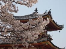 +++ りり☆Blog evolution +++ 広島在住OLの何かやらかしてる日記-20120408_117.jpg