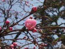 +++ りり☆Blog evolution +++ 広島在住OLの何かやらかしてる日記-20120408_118.jpg