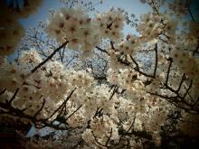 +++ りり☆Blog evolution +++ 広島在住OLの何かやらかしてる日記-20120408_127.jpg