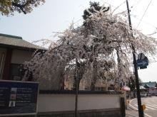 +++ りり☆Blog evolution +++ 広島在住OLの何かやらかしてる日記-20120408_135.jpg