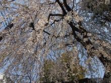 +++ りり☆Blog evolution +++ 広島在住OLの何かやらかしてる日記-20120408_139.jpg