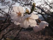 +++ りり☆Blog evolution +++ 広島在住OLの何かやらかしてる日記-20120408_164.jpg