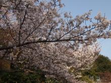 +++ りり☆Blog evolution +++ 広島在住OLの何かやらかしてる日記-20120408_166.jpg